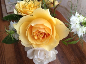 Rose_yellow1