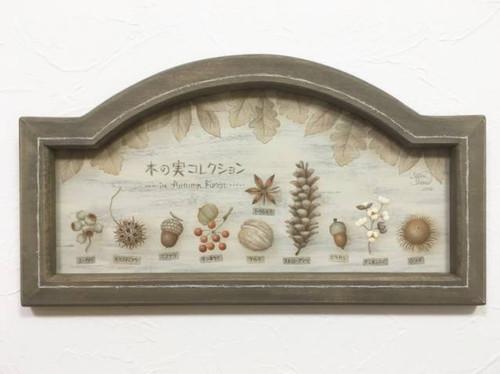木の実コレクション